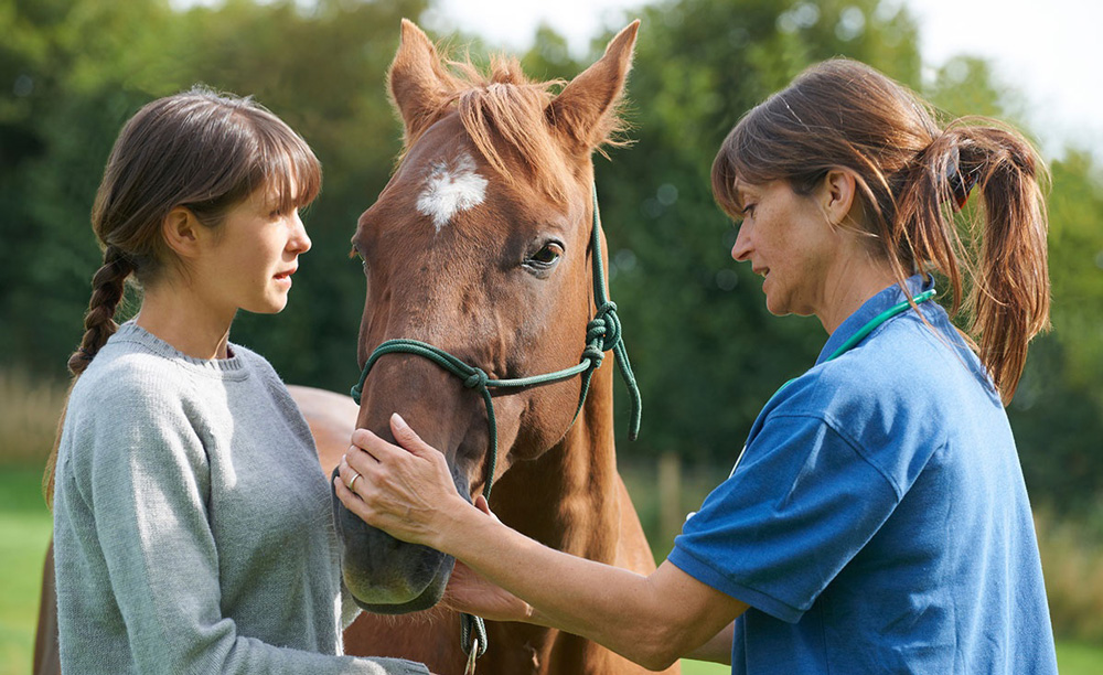acquisto cavallo