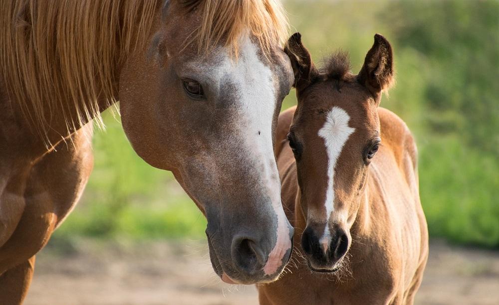 Alla scoperta del nostro Foaling Alarm