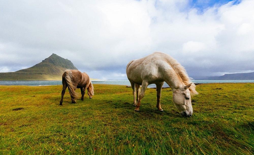 Allevamento di cavalli: 3 consigli da non sottovalutare