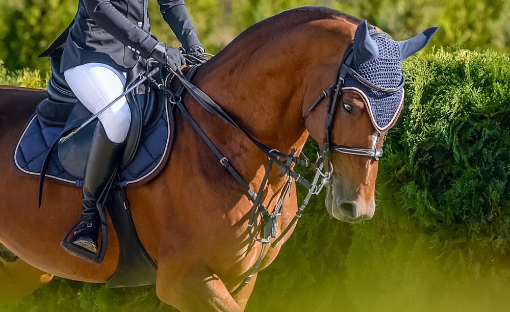 Le principali caratteristiche di un cavallo purosangue