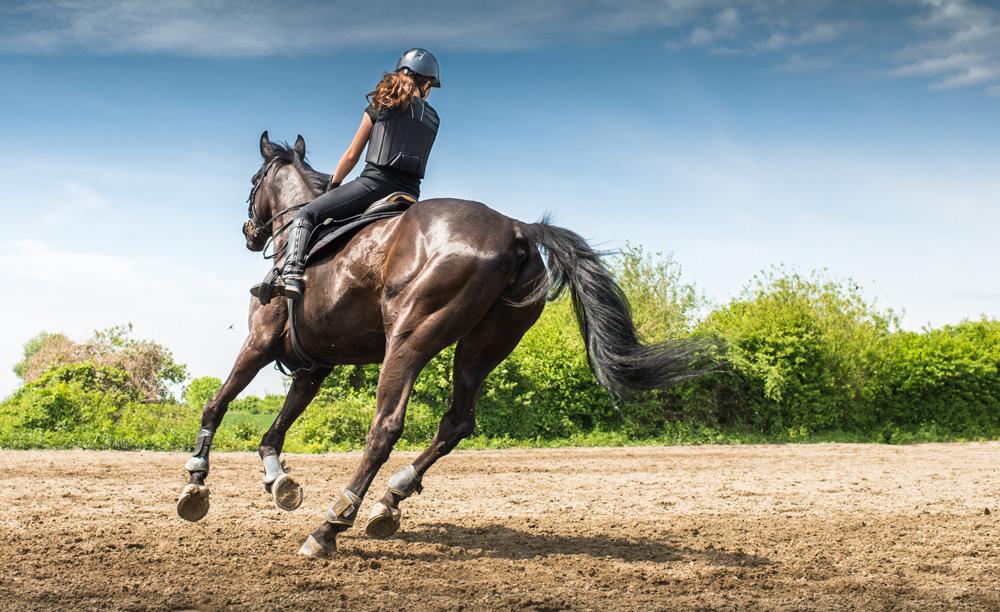 Consigli per la preparazione del cavallo ad una gara