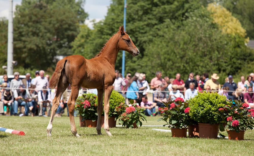 Come vendere un cavallo all'asta? I suggerimenti