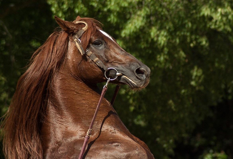Come preparare il cavallo per un concorso ippico