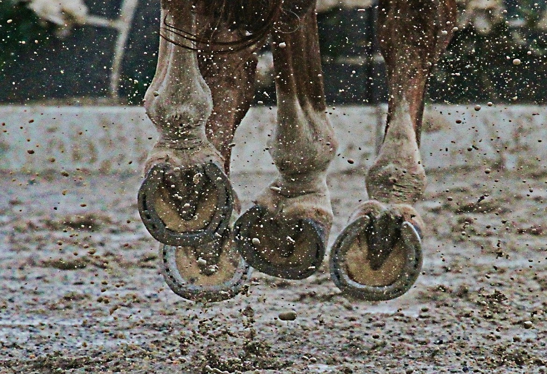 Preparare il cavallo per un concorso ippico | Foaling Alarm