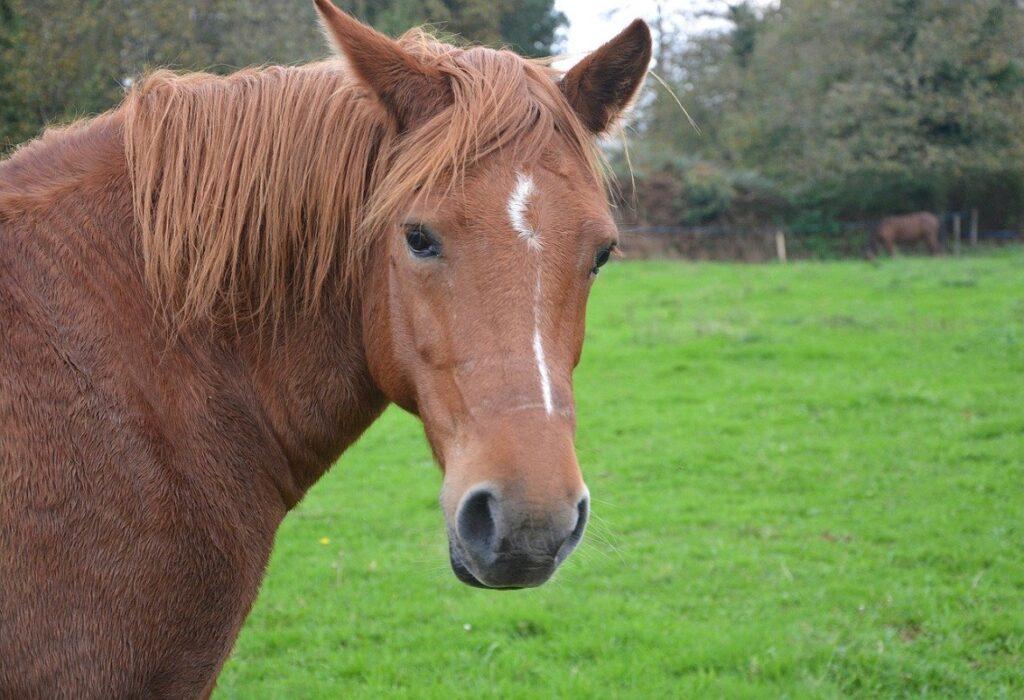 monitoring the mare's pregnancy