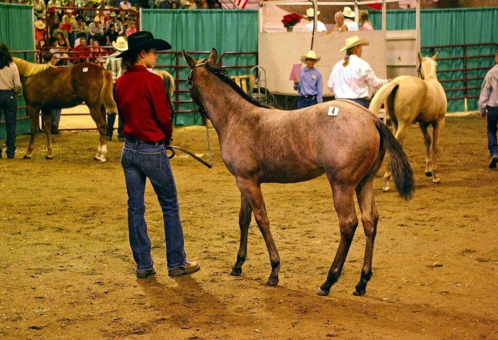 How do horse auctions work?