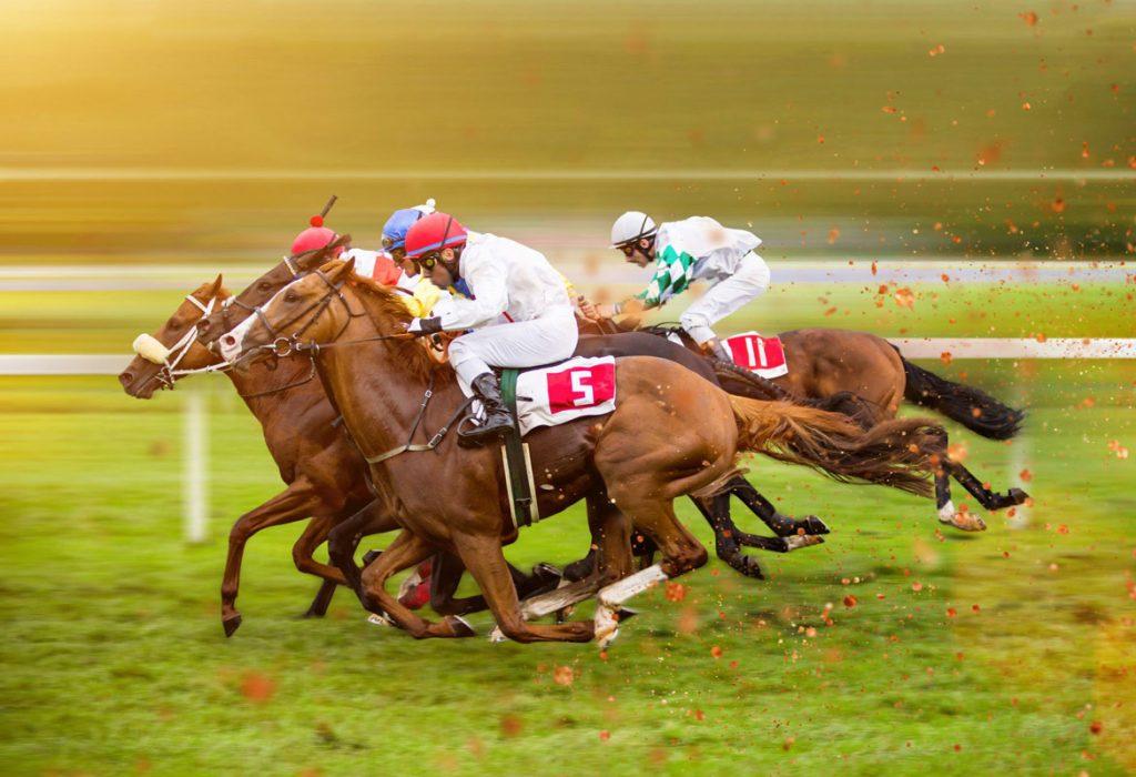 breeding a racehorse