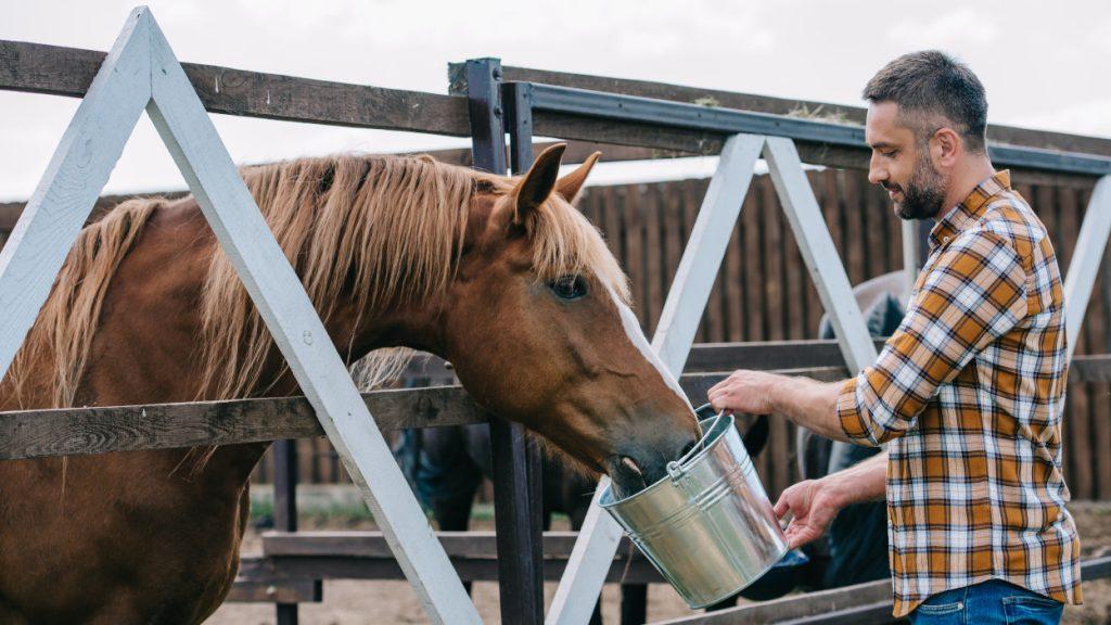 become a horse breeder