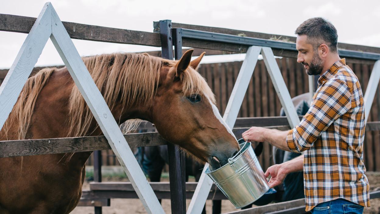 Come diventare allevatore di cavalli