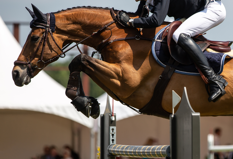 Il Campionato del Mondo equestre nel 2022